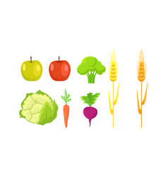 apple broccoli cauliflower carrot radish wheat vector image