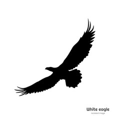 black silhouette of white eagle isolated drawing vector image