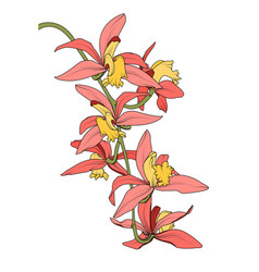 cattleya orchid phalaenopsis branch bouquet vector image