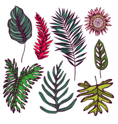 Collection of hand drawn tropical leaves vector