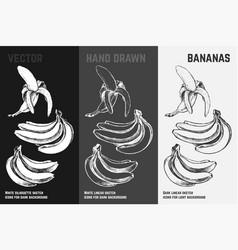 hand drawn bananas fruits sketch set vector image