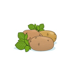 Potato Isolated on White vector