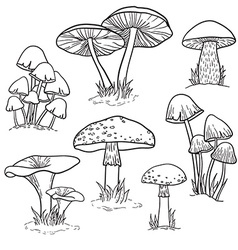 set bright hand drawn mushrooms vector image