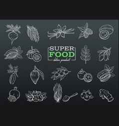 Sketch superfood vector