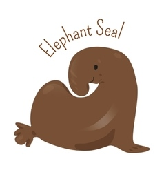 Elephant Seal isolated on white vector image vector image