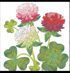 Flowers of red and white clover with leaves vector