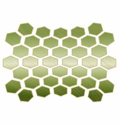 turtle shell vector image vector image