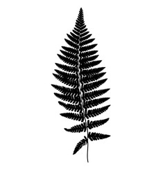 Fern frond black silhouette Forest concept vector image