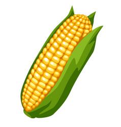 Sweet golden ripe corn vector