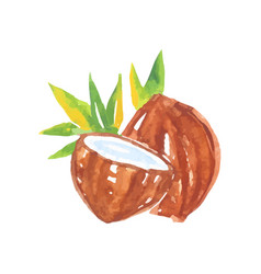watercolor painting of whole coconut with half and vector image