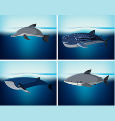 four types of wildlife in the ocean vector image