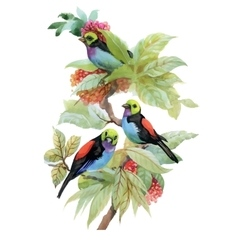 Berries and birds watercolor floral vector image