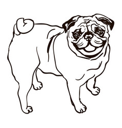 dog breed pug vector image