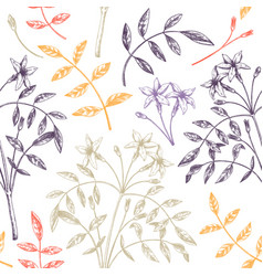 hand sketched jasmine seamless pattern in color vector image