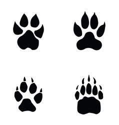 lion tiger wolf bear footprint vector image