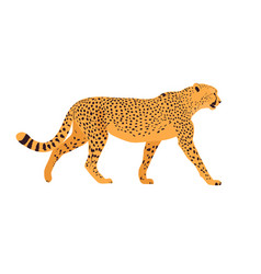 Cheetah standing in front white background vector