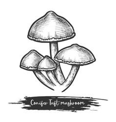 Fungus sketch or design mushroom vector