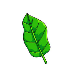 Green succulent leaf from tropical collection vector