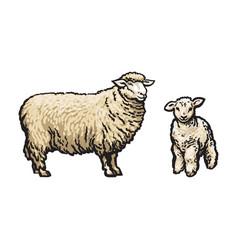 sketch cartoon style sheep and lamb set vector image