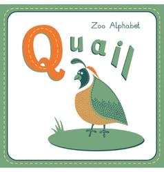 Letter Q - Quail vector image vector image