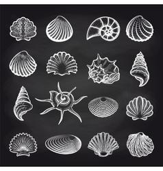 Sea shells on chalckboard vector image vector image