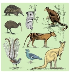 set of australian animals engraved hand drawn vector image vector image