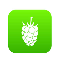 blackberry fruit icon digital green vector image