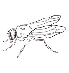 fly drawing on white background vector image
