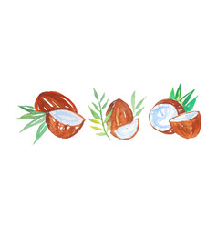 Watercolor coconut with palm leaves vector