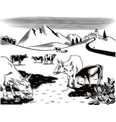 cows grazing in a meadow a cow is nursing her calf vector image vector image