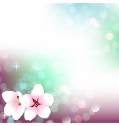 Spring bokeh cherry blossom background vector image vector image