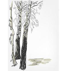 Birch background sketch line watercolor tree vector