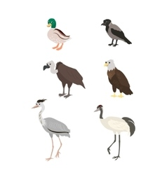 Cartoon set duck crow buzzard eagle crane heron vector image