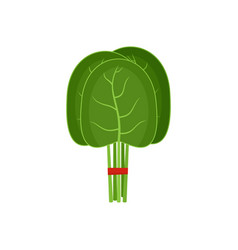group of spinach leaves icon flat style vector image