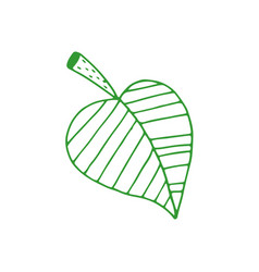 hand drawn leaf vector image