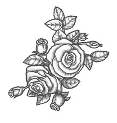 hand drawn rose flower with leavessketch plant vector image