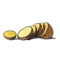 Sketch ripe raw unpeeled sliced potato vector