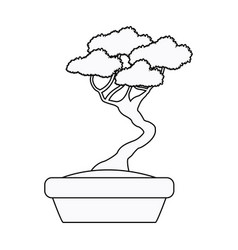 pot bonsai tree natural plant decoration outline vector image