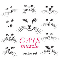 Abstract cats muzzle set vector