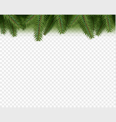 Christmas decorations evergreen pine branches vector
