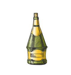 conical hand drawn color bottle of wine vector image