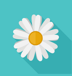Daisy flower flat icon vector