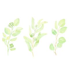 Watercolor hand drawn green seeded eucalyptus vector