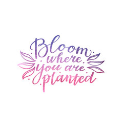 Bloom where you are planted inspirational text vector