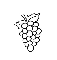 Bunch of grapes hand drawn sketch icon vector