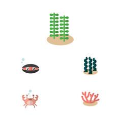 Flat icon sea set of algae scallop seaweed and vector