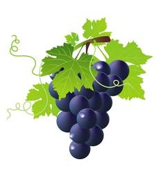vine black vector image vector image