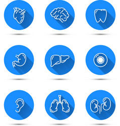 White outline icons of humans organs on blue vector image vector image