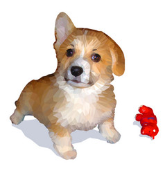 Low-polygon drawing of welsh corgi vector