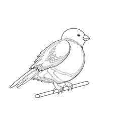 A monochrome sketch of a bird bullfinch vector